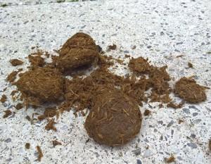 De droge mestballetjes vallen snel uit elkaar