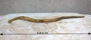 Volwassen vrouwelijke spoelworm
