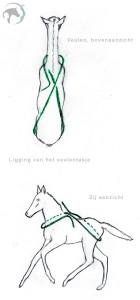 De ligging van het touw voor het veulentasje